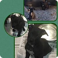 Adopt A Pet :: Clover - Groveland, FL