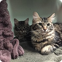 Adopt A Pet :: Liesel and Gretl, purrfect pai - Livonia, MI