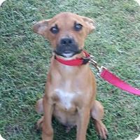 Adopt A Pet :: Johnny - Willingboro, NJ