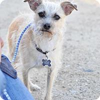 Adopt A Pet :: Kipp - Newhall, CA