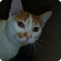 Adopt A Pet :: Chase - Hamburg, NY