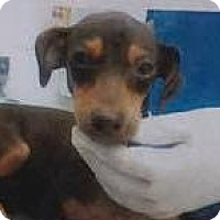 Adopt A Pet :: Snoop - Aurora, CO