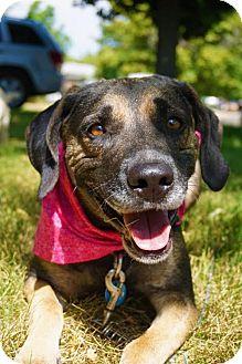 Shepherd (Unknown Type) Mix Dog for adoption in Aurora, Colorado - Molly