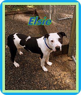 Terrier (Unknown Type, Medium) Mix Dog for adoption in Berkeley Springs, West Virginia - Elsie