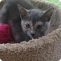 Adopt A Pet :: Jolie - St. Francisville, LA