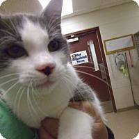 Adopt A Pet :: Jack - Muscatine, IA