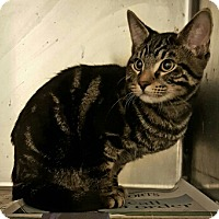 Adopt A Pet :: Stimpy - Lyons, IL