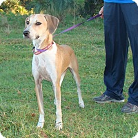 Adopt A Pet :: Hillary - Oviedo, FL