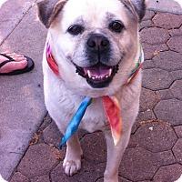 Adopt A Pet :: DELILAH - Ojai, CA