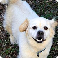 Adopt A Pet :: Buckwheat - Allentown, PA