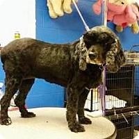 Adopt A Pet :: Raven - Mission, KS