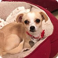 Adopt A Pet :: Wobbles - San Diego, CA