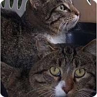 Adopt A Pet :: Barn Cats!! - Park Falls, WI