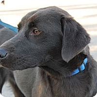 Adopt A Pet :: *Bud - Westport, CT
