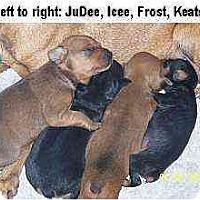 Adopt A Pet :: Frost: - Minneapolis, MN