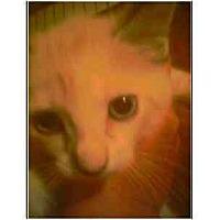 Adopt A Pet :: Chaka Kahn - Owasso, OK