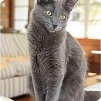 Adopt A Pet :: Toby - Bonita Springs, FL