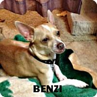 Adopt A Pet :: Benzi - Vacaville, CA