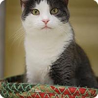 Adopt A Pet :: Ivy II - DFW Metroplex, TX