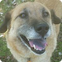 Adopt A Pet :: AVA - Paron, AR