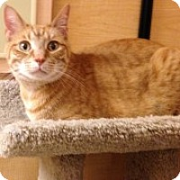Adopt A Pet :: Melvin - McHenry, IL