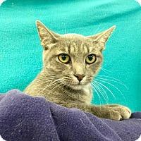 Adopt A Pet :: Whitney - Visalia, CA