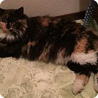 Adopt A Pet :: Sasha - Novato, CA