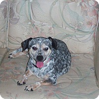 Adopt A Pet :: Dottie - Homosassa, FL
