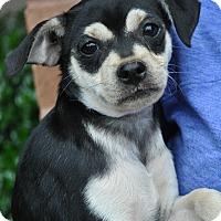 Adopt A Pet :: Kate Spade - Atlanta, GA