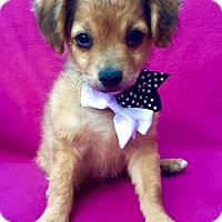 Adopt A Pet :: Galaxy - Irvine, CA