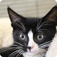 Adopt A Pet :: Hamster - Sarasota, FL