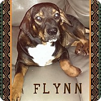 Shar Pei/Hound (Unknown Type) Mix Dog for adoption in Enid, Oklahoma - Flynn