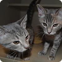 Adopt A Pet :: Jitter Bug - Ridgeland, SC
