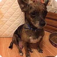 Adopt A Pet :: Margarita - Marlton, NJ