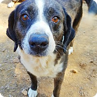 Adopt A Pet :: Stuart - Kingston, TN