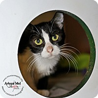 Adopt A Pet :: Angelica - Lyons, NY