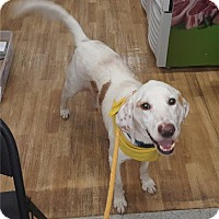Hound (Unknown Type) Dog for adoption in Richmond, Virginia - Huck