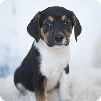 Adopt A Pet :: Maddie - Louisville, IL
