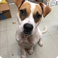 Adopt A Pet :: June - Middlebury, CT