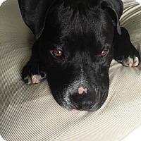 Adopt A Pet :: Sanford - St. Petersburg, FL