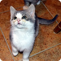 Adopt A Pet :: Fallynn - Richmond, VA