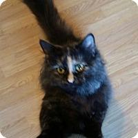 Adopt A Pet :: Princess Kate - South Bend, IN