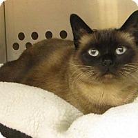Adopt A Pet :: Emerald - Hamilton, ON