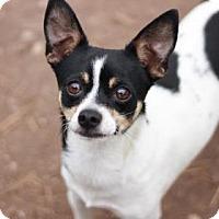 Adopt A Pet :: BARKWIN - Kyle, TX