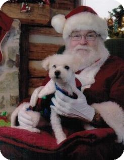 Bichon Frise Rescue Dogs For Adoption In Ontario