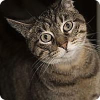 Adopt A Pet :: Tinkerbell - Lombard, IL