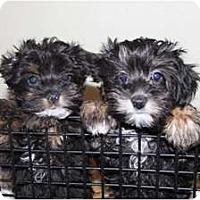 Adopt A Pet :: Kiah - Antioch, IL