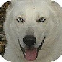 Adopt A Pet :: Sheba - Hamilton, ON