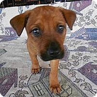 Adopt A Pet :: Alice - San Diego, CA