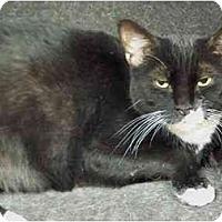 Adopt A Pet :: Frankie - Secaucus, NJ